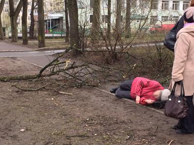 В Гатчине на пенсионерку упала ветка