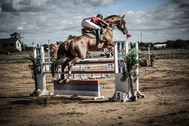 Гатчинские открытые конные игры 2015